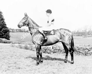 Arkle with Pat Taaffe (b478-01a)